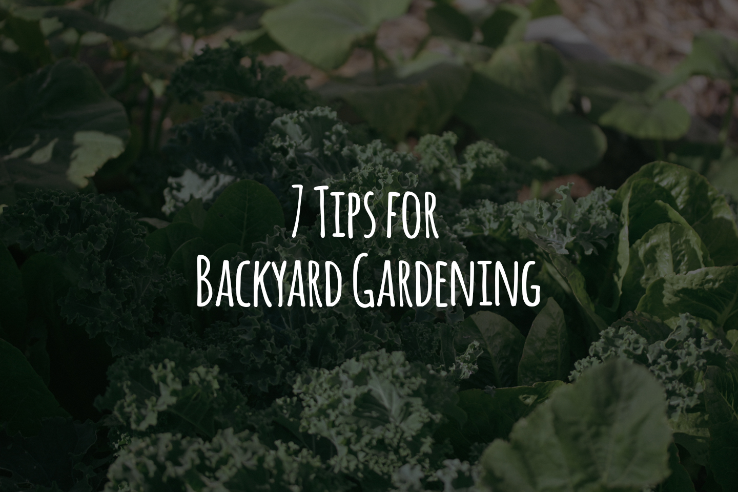 7 Tips for Backyard Gardening