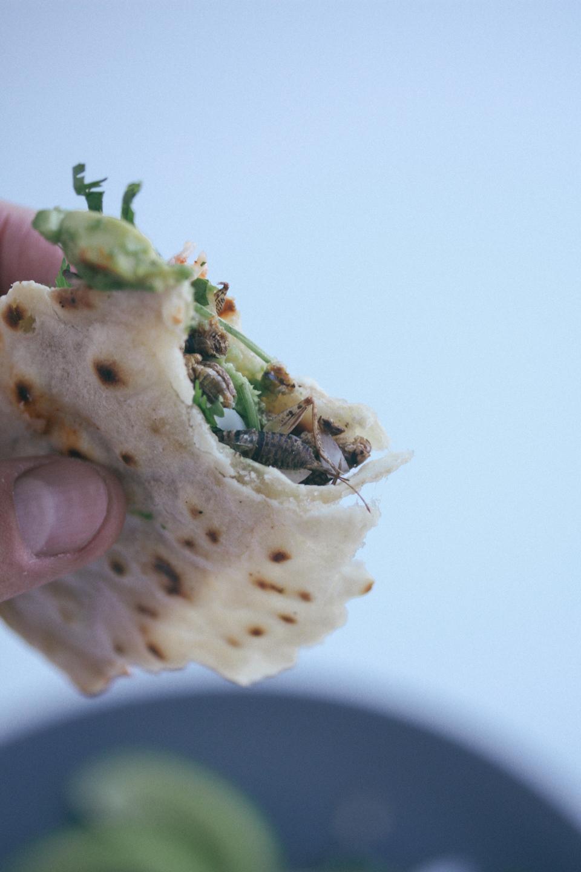 Cricket Tacos